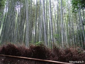Arashiyama (20)