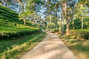 Scenic tea garden at Srimangal