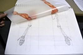 anatomy sb arms