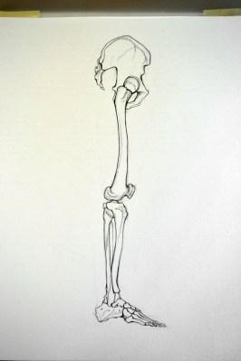 anatomy sb leg