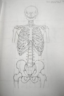anatomy sketch book skeleton