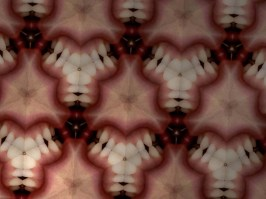 Les Fleurs du mal - Tooth Flower photograph, 14 x 18 inches, 2013