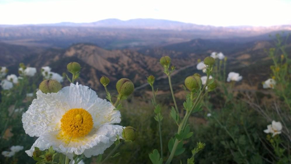 Reyes Peak 09