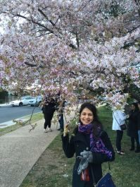 Cherry Blossom by the Tidal Basin