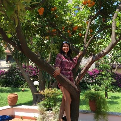 Oranges in the hotel garden