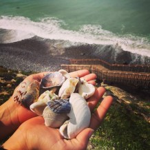 Shells from Carlsbad shore