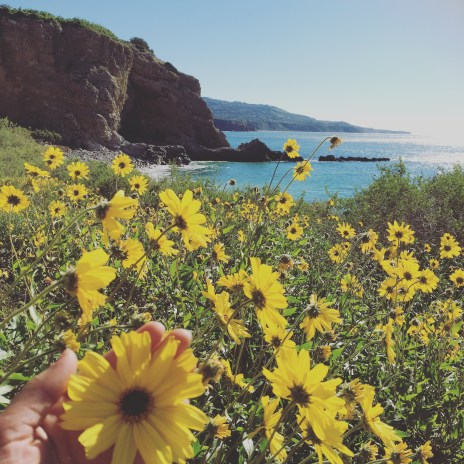 Wild Flowers by the pacific