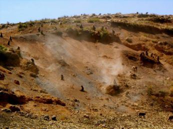 Baboons tumbling down the hill