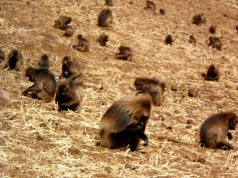 To their dinner