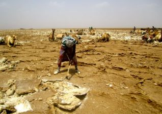 Hacking the salt from the ground