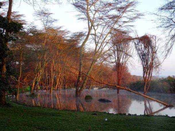 The Lake at dawn