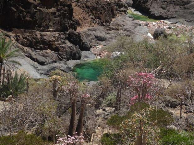 More wadi rock pools