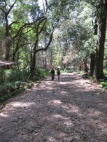 On the way to Netsa Art Village, held within a public park. Addis Ababa, Ethiopia. Photo by Nikki A. Greene.