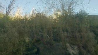 Overgrown rear garden area