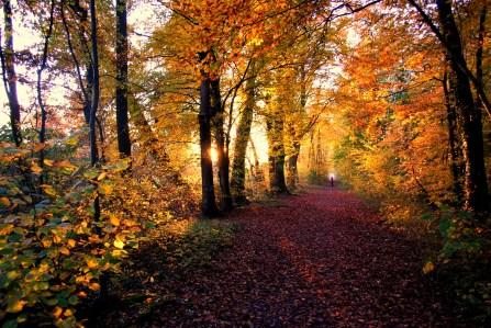 Beautiful colours of fall