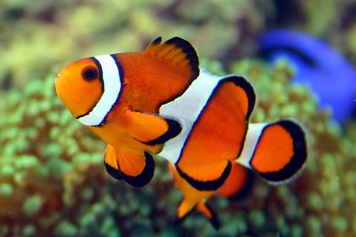 8 Cara Bisnis Ikan Hias Untung Besar Untuk Pemula