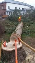 Baum (12)