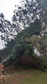 Baum (17)