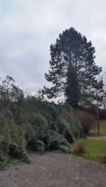 Baum (9)