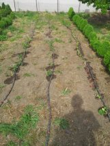 My garden - Drip Irrigation