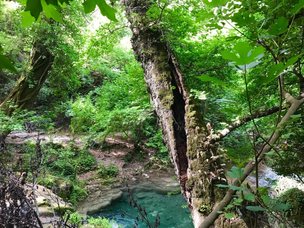 4 kilometre yürüyün, bir ağaç dikilsin!