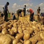 «الزراعة»: ارتفاع صادرات الفاكهة والخضر لـ4.5 مليون طن