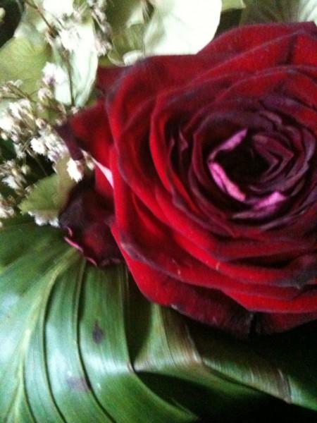 5+6 Barnets rose