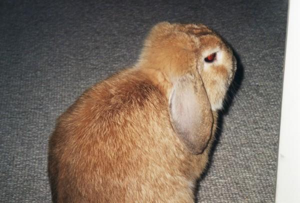77 dage – Farvel til kaninen