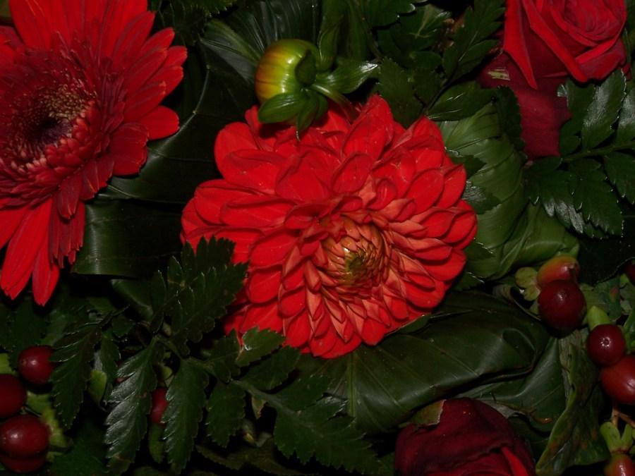 Roser … roser og varme