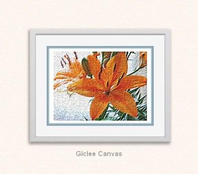 Orange Lily (Lilium Bulbiferum)..