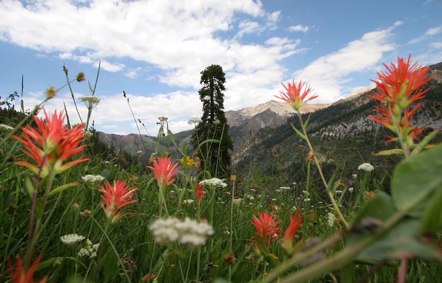 1000 flowers vs. the sequoia
