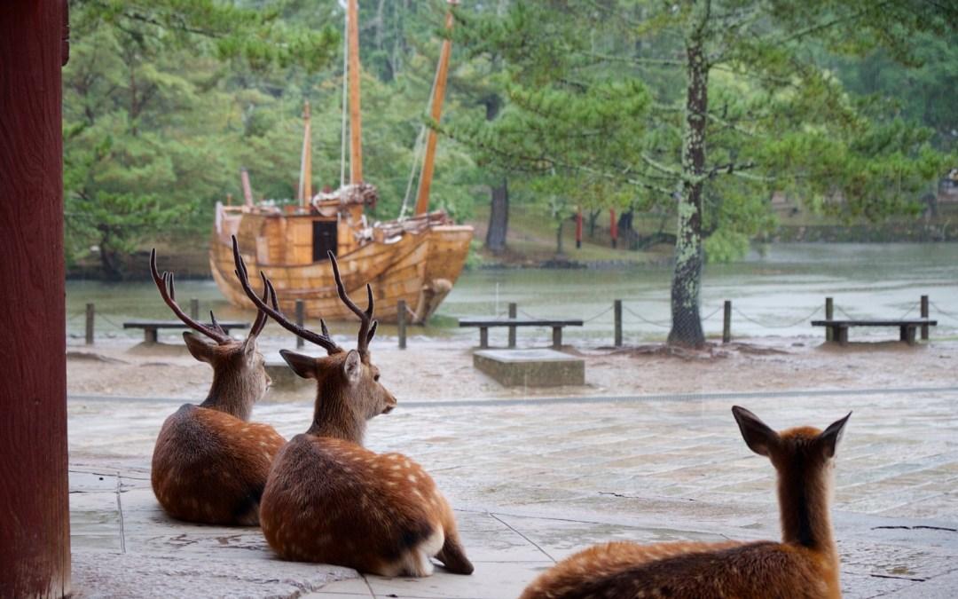 Aout 2016 – Japon, Nara
