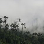 Palm Trees in Colombia