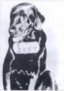 """מספר אסיר 2559. כלב שהורשע ברצח ונשלח למאסר בבית כלא - משפטים נגד בעלי חיים התקיימו באירופה מאז המאה התשיעית והתפשטו מאוחר יותר לאמריקה עד המאה ה-20. החיות הועמדו לדין בדר""""כ באשמת רצח בני אדם, מעשי סדום, פגיעה ביבולים ומטרד לציבור. עונשם היה לרוב מאסר, עינויים והוצאה להורג."""