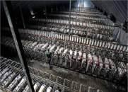 עבדות חזירים