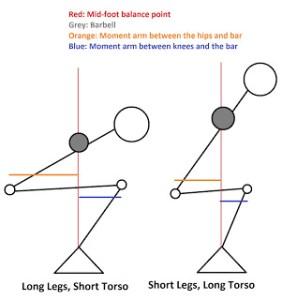 short-torso-vs-long-torso