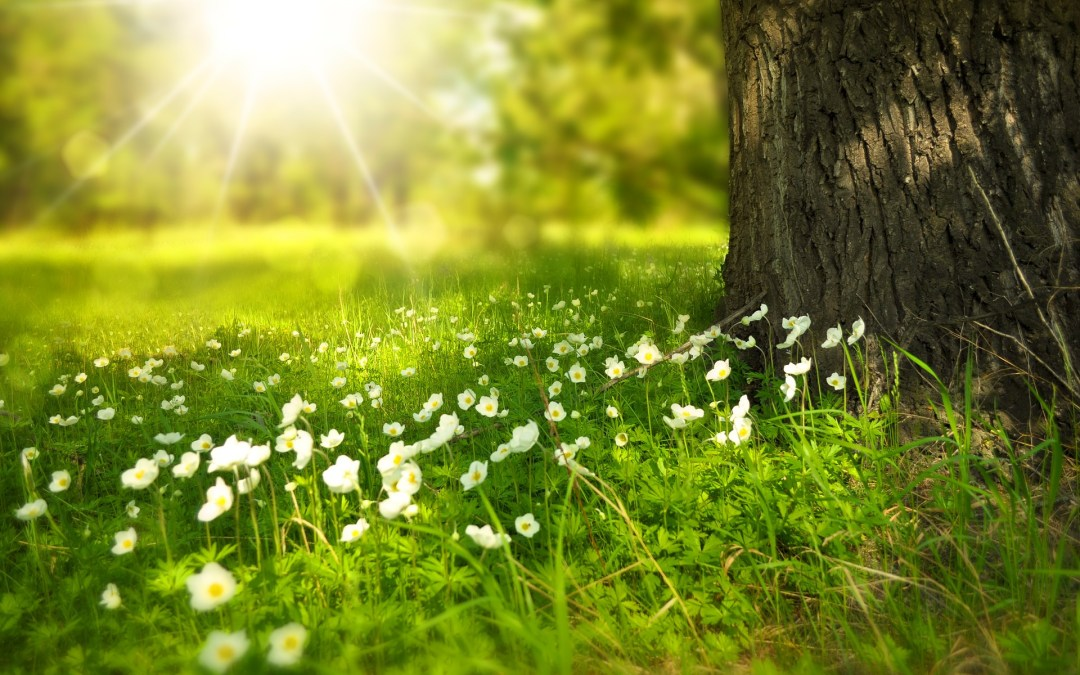 Astrologia semanal: Florescer para todos e Lua Cheia – 19 a 25/09
