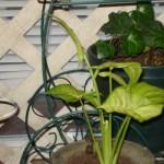 25 Beautiful House Plant 9 Leaves Garden Plants