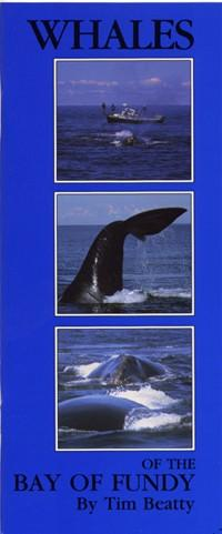Whales of Bay of Fundy