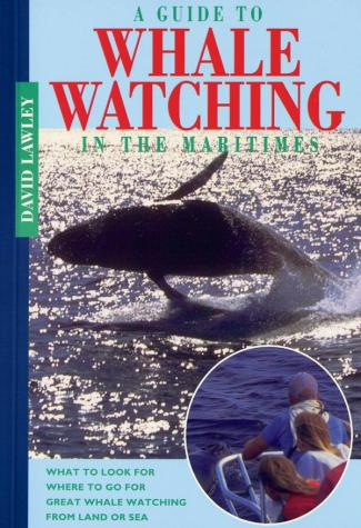 A Guide to Whale Watching in the Maritimes