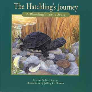 Hatchling's Journey