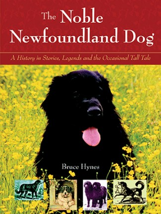 Noble Newfoundland Dog