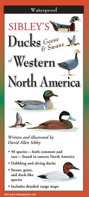 Geese /& Swans of Eastern North America Sibleys Ducks Folding Guide