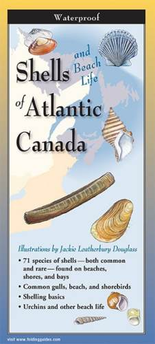 Shells of Atlantic Canada – Folding Guide