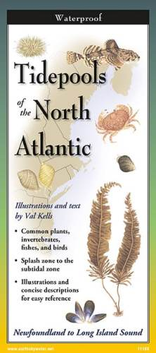 Tidepools of the North Atlantic – Folding Guide