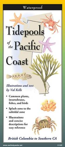 Tidepools of the Pacific – Folding Guide