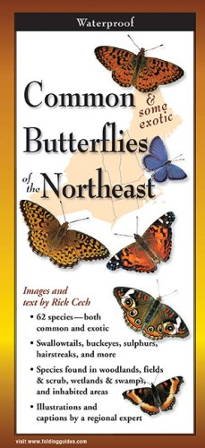 Common Butterflies of the Northeast-Fold