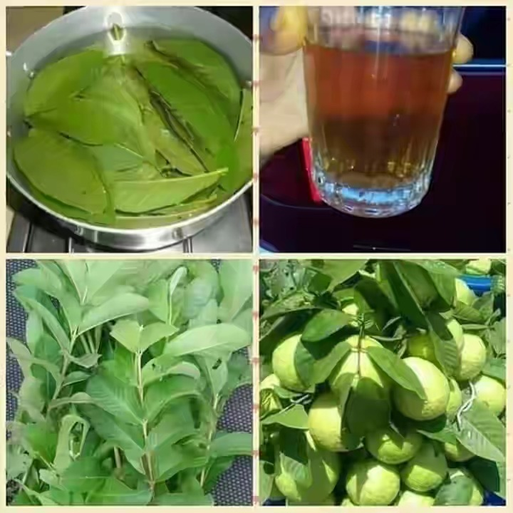 Guava leaves tea side effects