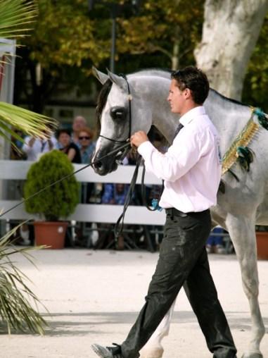 arabianhorses002
