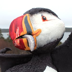 puffin cake Canada cakers escape